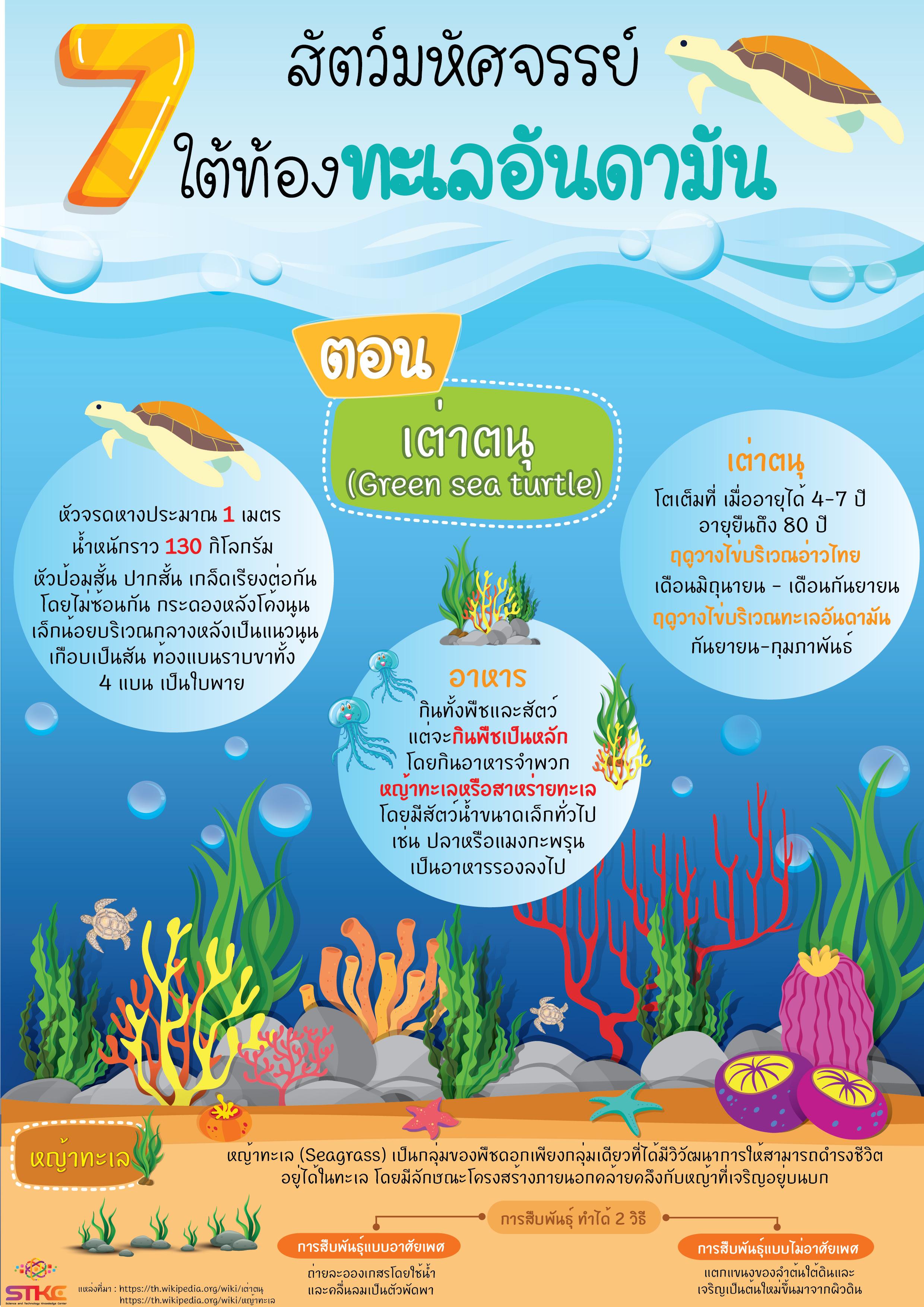7 สัตว์มหัศจรรย์ ใต้ท้องทะเลอันดามัน ตอน เต่าตนุ  (Green sea turtle)