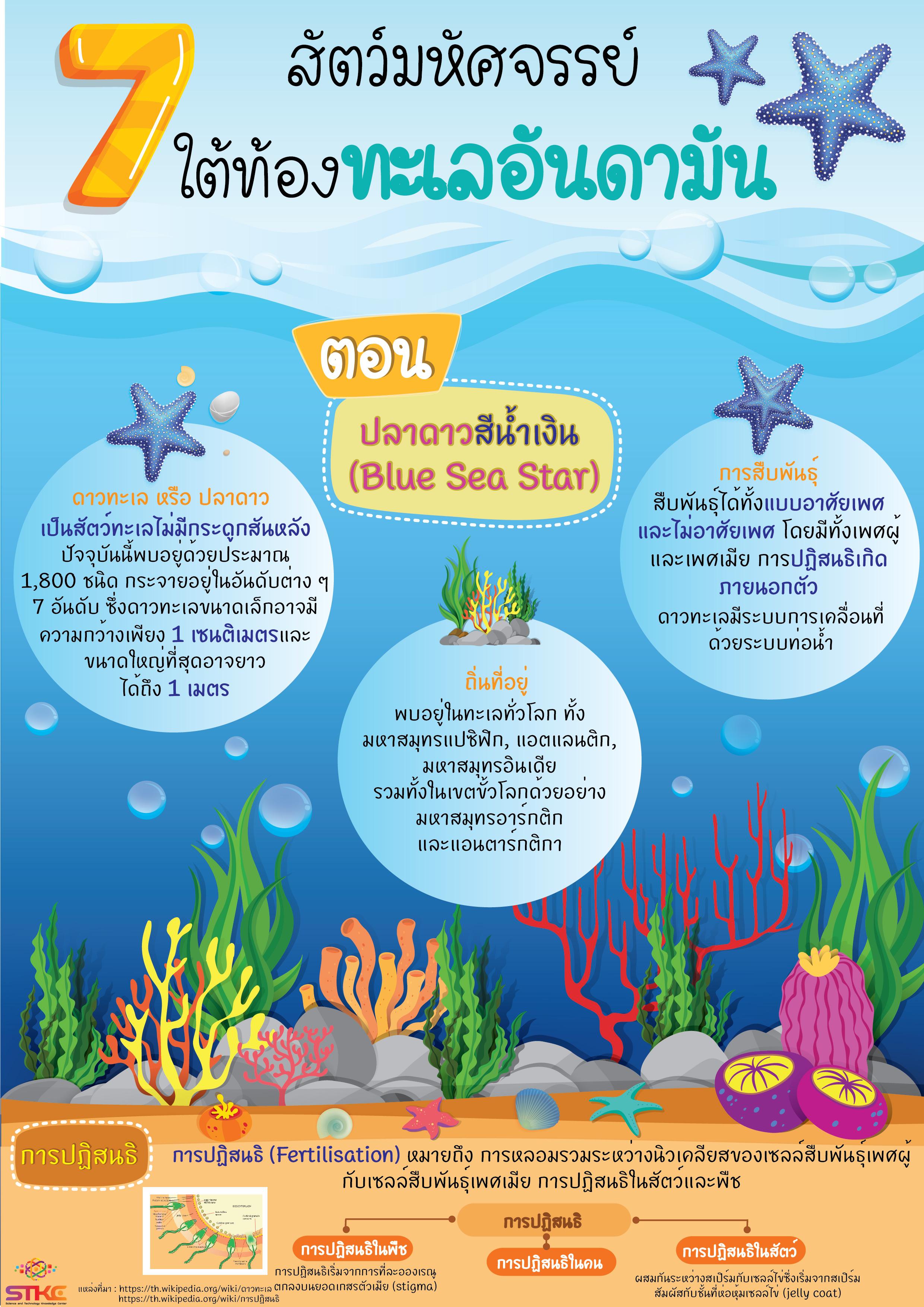 7 สัตว์มหัศจรรย์ ใต้ท้องทะเลอันดามัน ตอน ปลาดาวสีน้ำเงิน Blue Sea Star