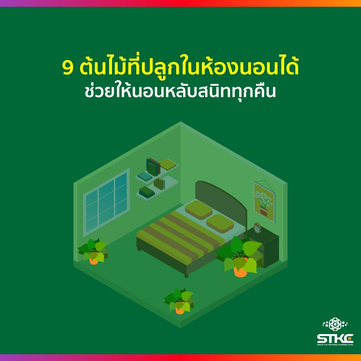 9 ต้นไม้ที่ปลูกในห้องนอนได้ ช่วยให้นอนหลับสนิททุกคืน