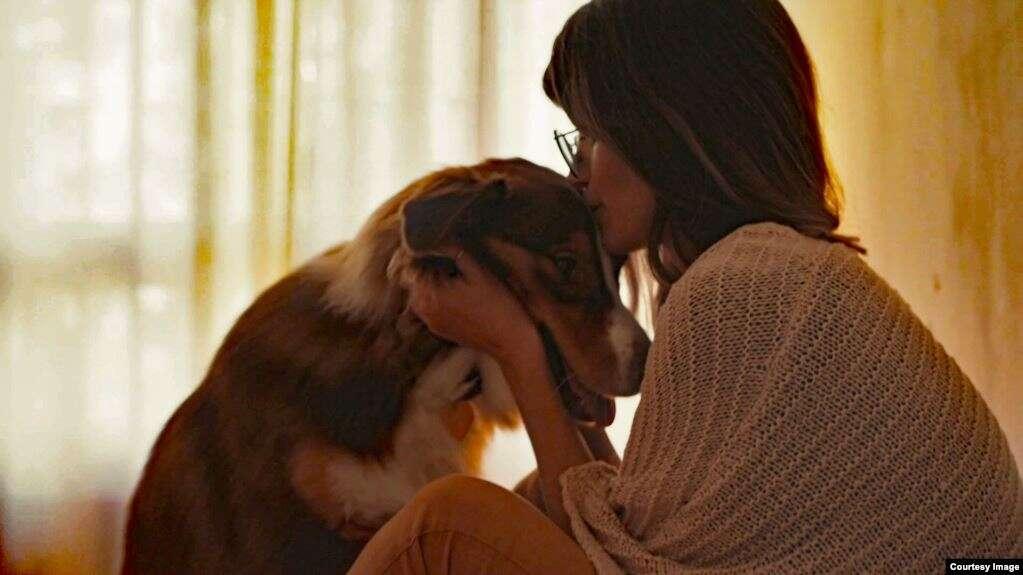 สัตว์เลี้ยงแสนรักมีประโยชน์ จริงหรือไม่สัตว์เลี้ยงแสนรักมีประโยชน์ จริงหรือไม่